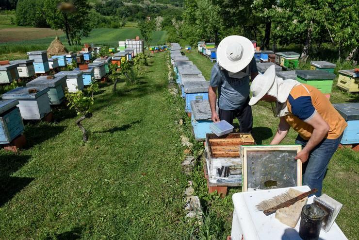 Kragujevac uzgajanje pcelinjih matica Ivan i Boban Vasiljevic 130520 RAS foto Nebojsa Raus11