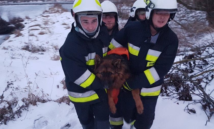 Strażacy uratowali dwa owczarki niemieckie, które były uwięzione w lodowatej rzece