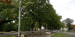 Drzewa zatrzymały remont na Biskupinie