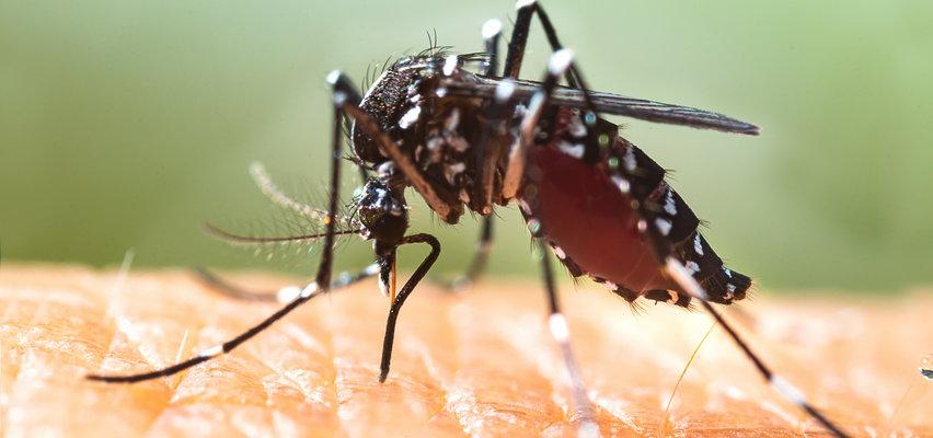 """Komar tygrysi u naszych sąsiadów. Niemcy drżą przed """"najbardziej śmiercionośnym zwierzęciem na świecie"""""""