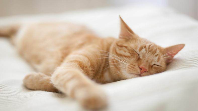Kot w łóżku