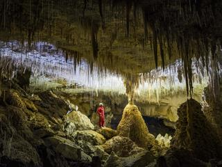 GLOW WORM CAVES / GLOW WORM CAVES /1456458