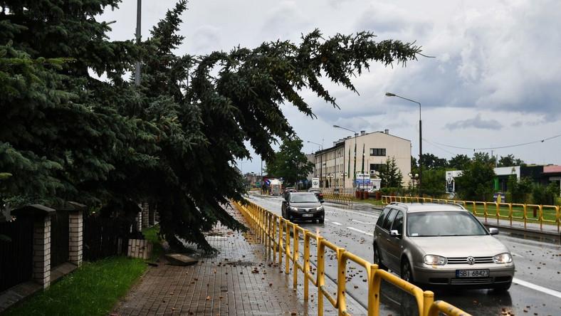 Powalone drzewa po nawałnicy