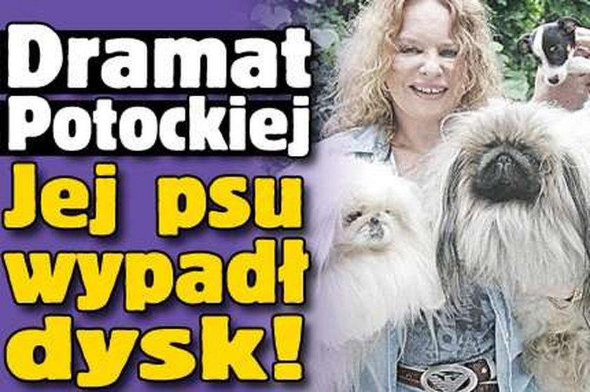 Dramat Potockiej. Jej psu wypadł dysk!