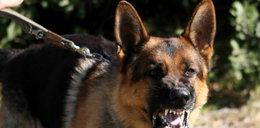 Mężczyzna zagryziony przez psy. Zwłoki znalazła żona