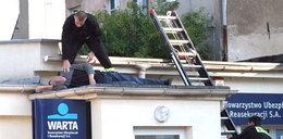 Ale jaja! Usnął na dachu!