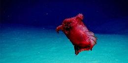 Sfilmowali podmorskiego potwora. Wygląda jak bezgłowy kurczak