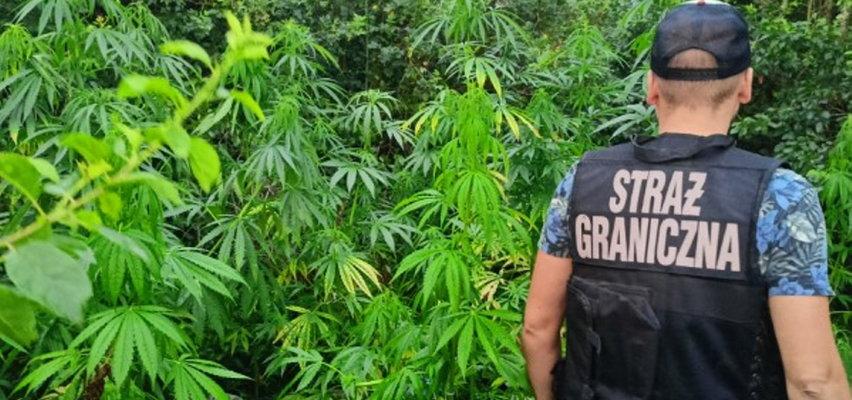 Policja zatrzymała 80-latkę. Chodzi o narkotyki!