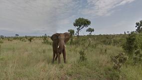 Safari w RPA na wyciągnięcie ręki dzięki Google Street View