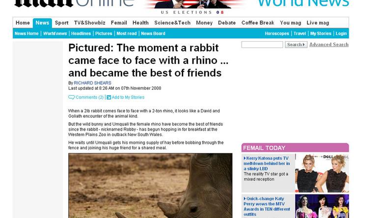 Taki mały królik, a nie boi się nosorożca