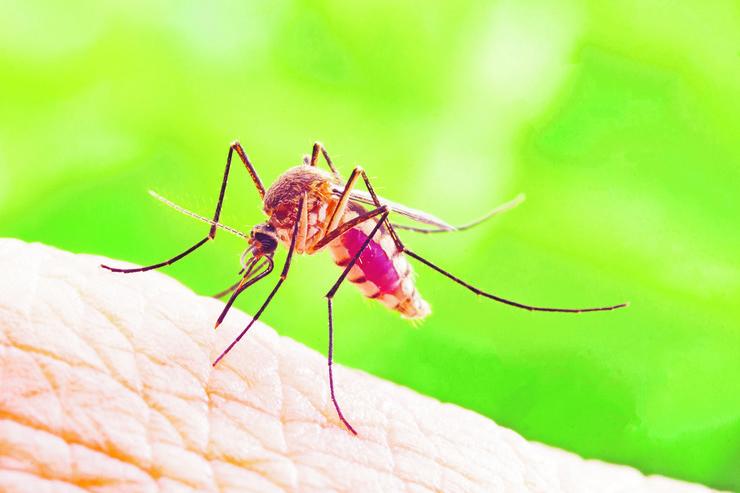 komarac foto