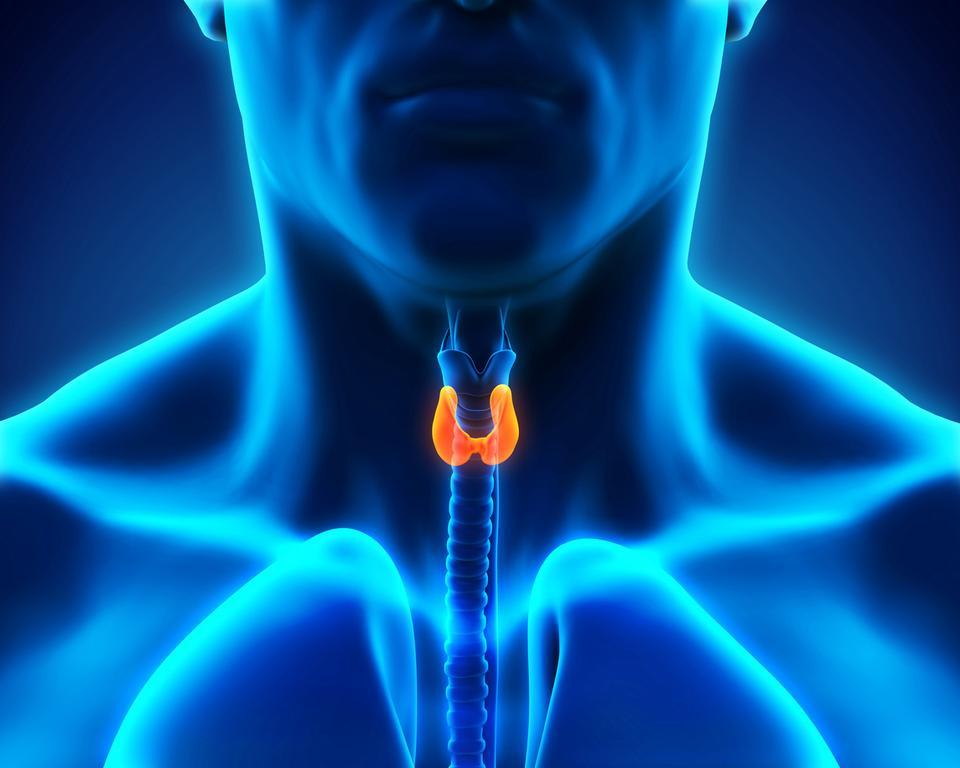 Nadmiar hormonów tarczycy pozbawia nas kilogramów