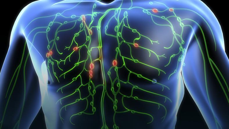 Układ Limfatyczychłonny Budowa Funkcje Choroby Zdrowie