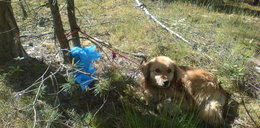 Kundelek czekał na śmierć w lesie