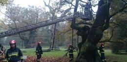 Strażacy ratowali 700-letniego Lecha
