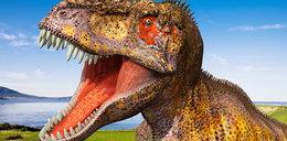 Zdradzają tajemnice dinozaurów