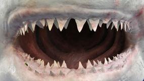Ojciec uwiecznił moment, na którym rekin atakuje jego córkę