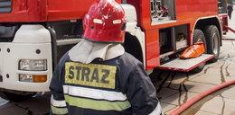 Pożar chlewni. 700 świń spłonęło żywcem!