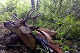 Ustreljeni jelen Nacionalni park Sutjeska