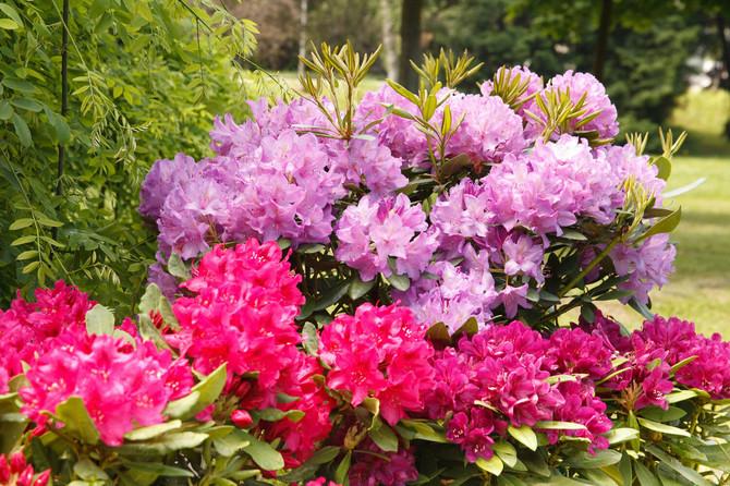 Najotrovnije Vrste Cveća U Vašem Domu Zenars