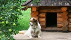 Jak wykonać budę dla psa?