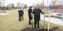 W Rybniku posadzonych zostanie 1000 drzew