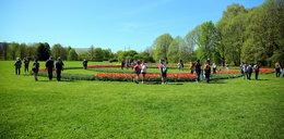 Ogród Botaniczny w Łodzi pełen tulipanów