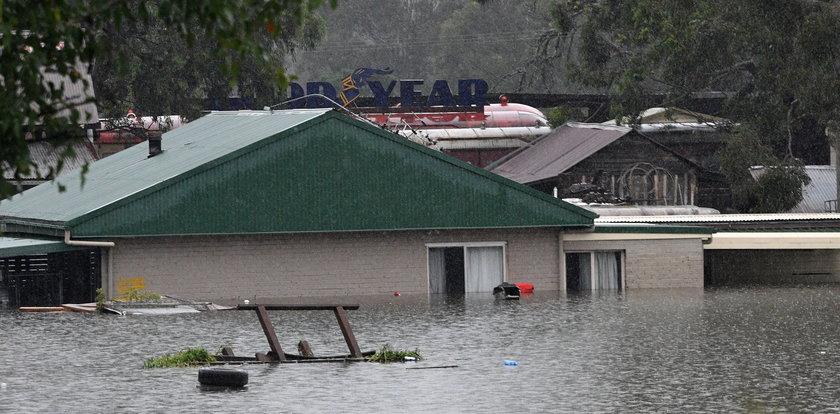 Powodzie w Australii. Tysiące pająków, węży i gryzoni próbują dostać się do domów