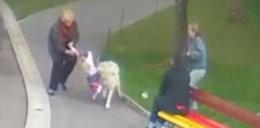 Wilk pogryzł 2-latkę. Zobacz dramatyczne nagranie!