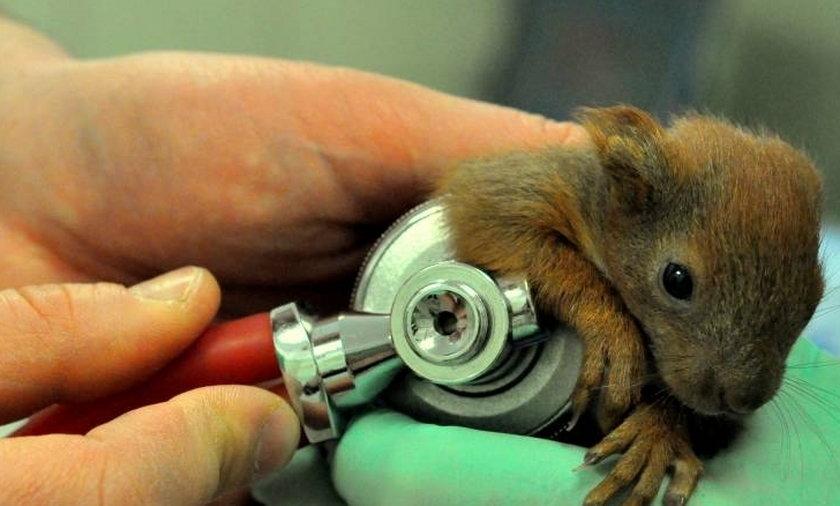 uratowali  wiewiórki