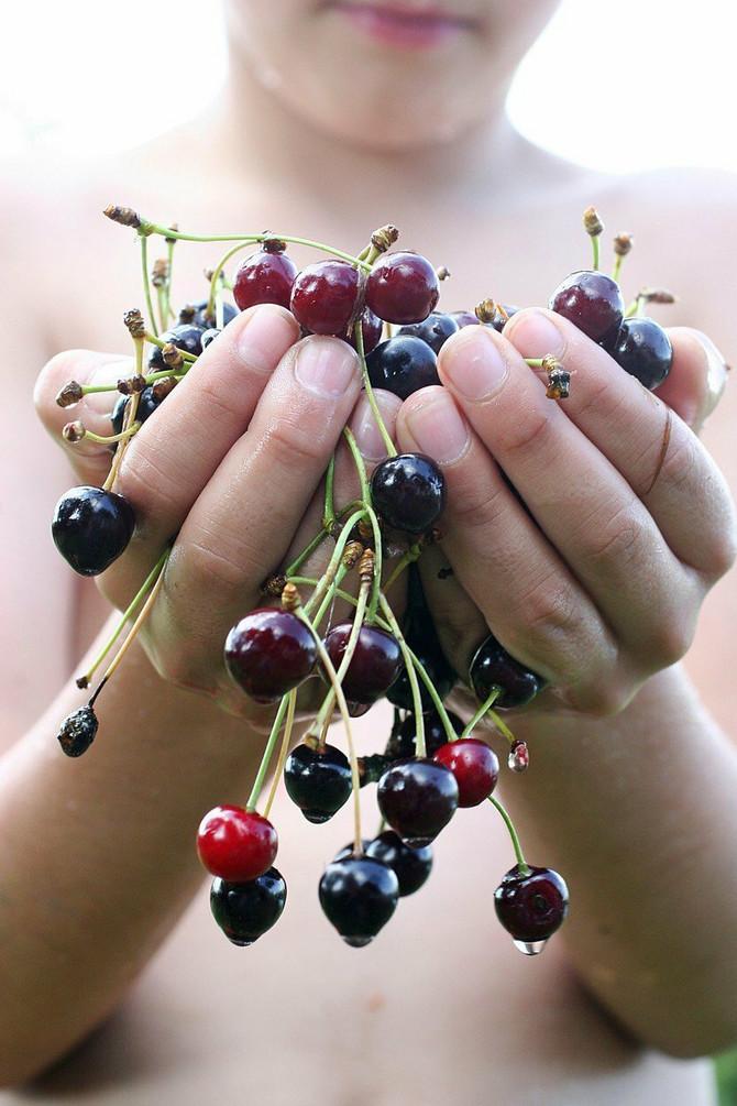 Višnje ublažavaju bolove, jačaju kosti i imaju antikancerogena svojstva. I to nije sve. Predstavljamo vam hit dijetu s višnjama, pomoću koje ćete se brzo i lako rešiti viška