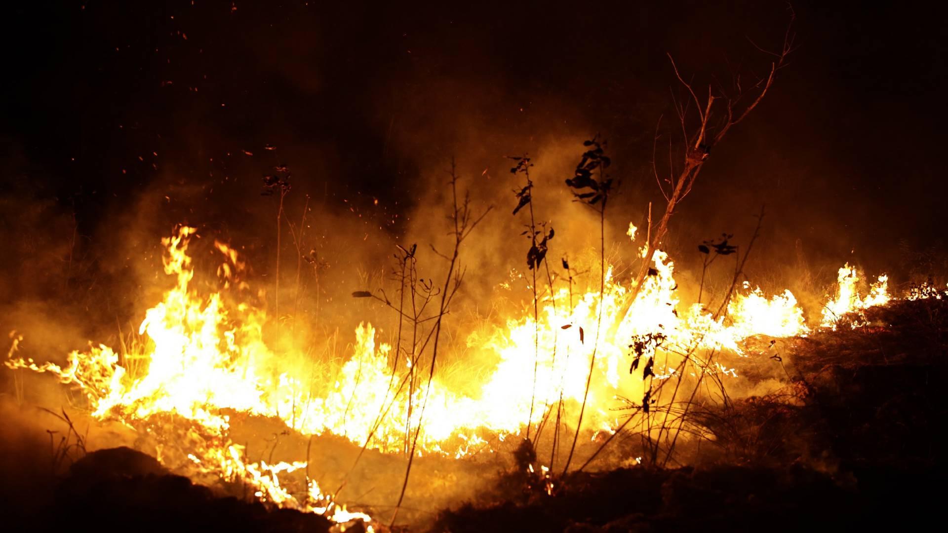 Brennt Der Regenwald Noch