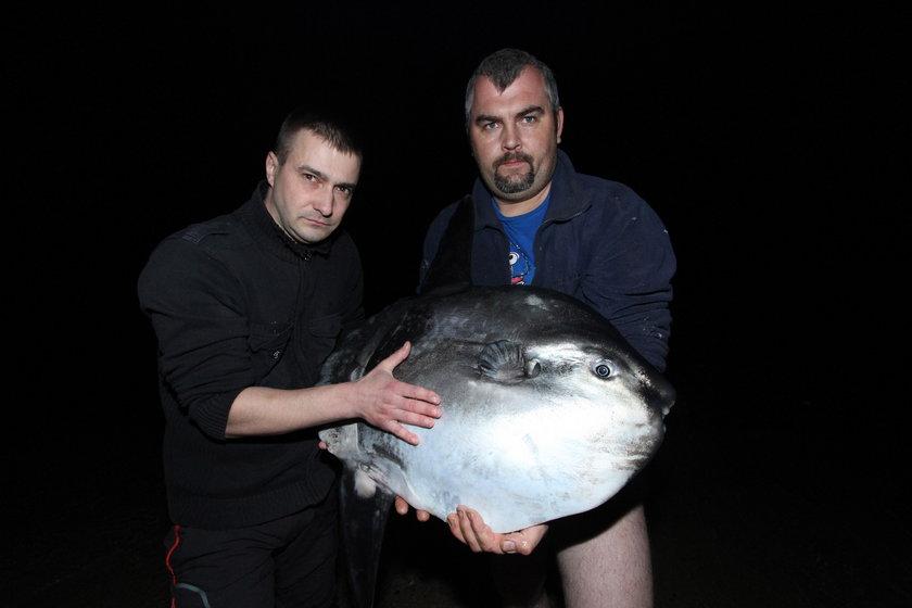 Dziwna ryba w Kołobrzegu