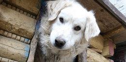 PO uwolni psy z łańcuchów i zwierzęta z cyrków