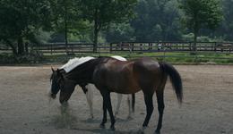 W Drzonkowie powstała nowa hala jeździecka