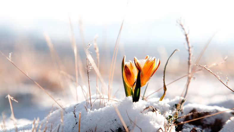 Wiosenna odwilż