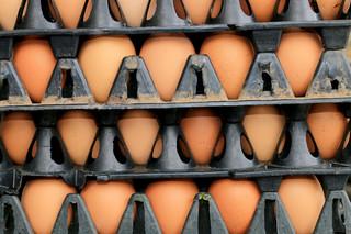 Bułgaria: Prawie pół miliona jajek z fipronilem wycofano z rynku
