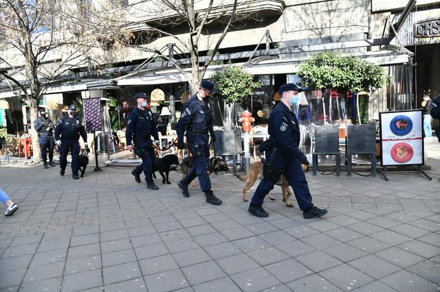Psi tragači u Kasini