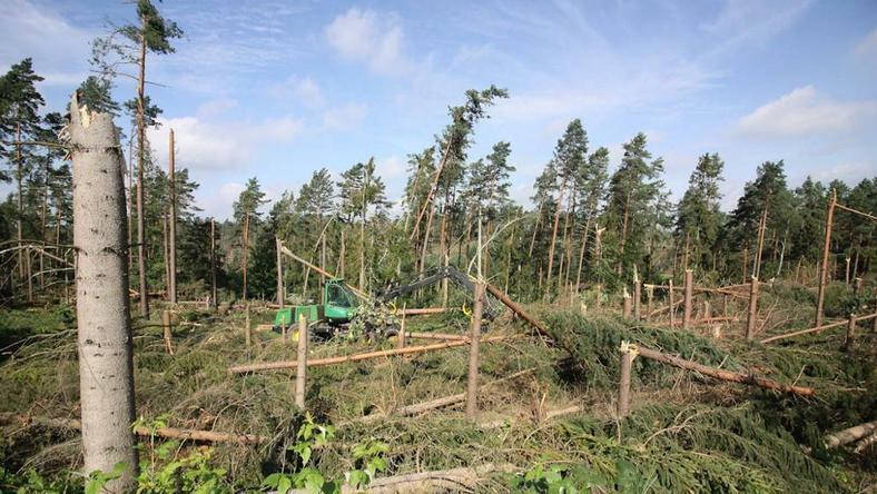 Na Pomorzu wichura zniszczyła ponad 10 tys. ha lasów państwowych