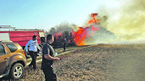 PONJAVICA: Posledice paljenja strnjike