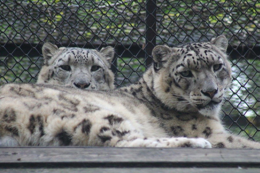 Puchaci podopieczni zoo postanowili się schłodzić. Misie wzięły orzeźwiającą kąpiel. Zwierzęta chronią się przed upałami jak tylko potrafią.