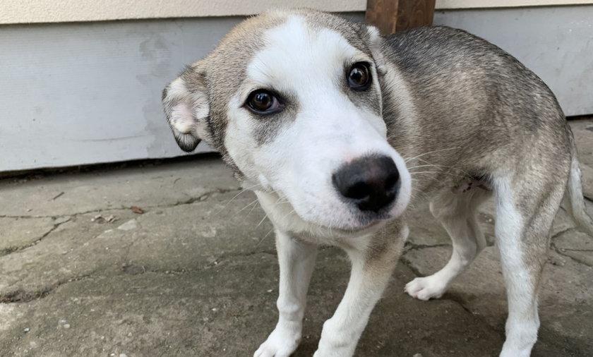 Ricco wrócił sam ze spaceru. Pies był niespokojny, próbował pokazać domownikom, że stało się coś strasznego.