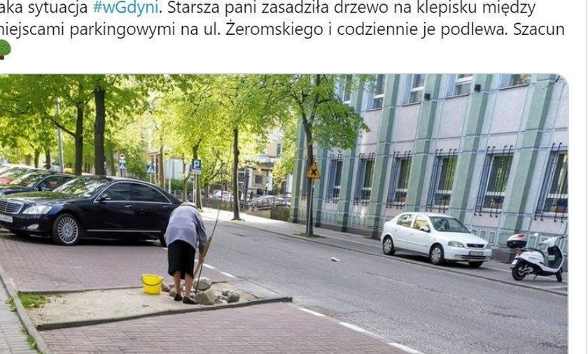 Starsza pani posadziła drzewo na parkingu w Gdyni. Podbiła serca internautów