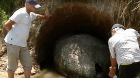 Argentyński farmer natknął się na olbrzymią skamielinę. Naukowcy przecierali oczy ze zdumienia