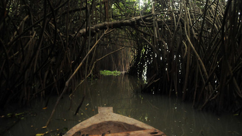 Top places for a beautiful boat ride through the mangroves [Travel the whole world]