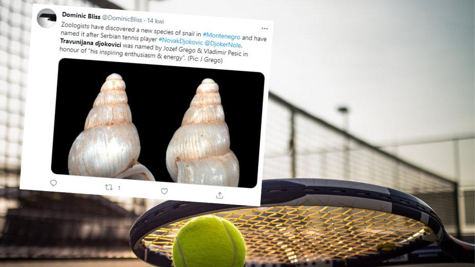 Nowy gatunek ślimaka nazwany na cześć tenisisty