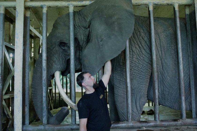 Słonica z opiekunem