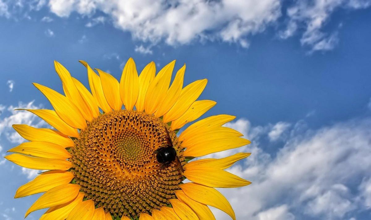 Nesto cudno se desava sa pcelama tokom potpunog pomracenja Sunca - ALI I PRE I POSLE