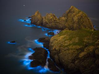 Blue Tears Bioluminescent algae Noctiluca Scintillans