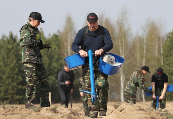 Lukašenko sadi drveće u selu Ljaskovići 25. aprila
